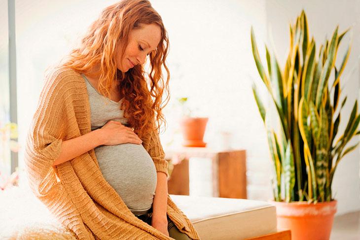 Снится беременность: Сонник Нострадамуса