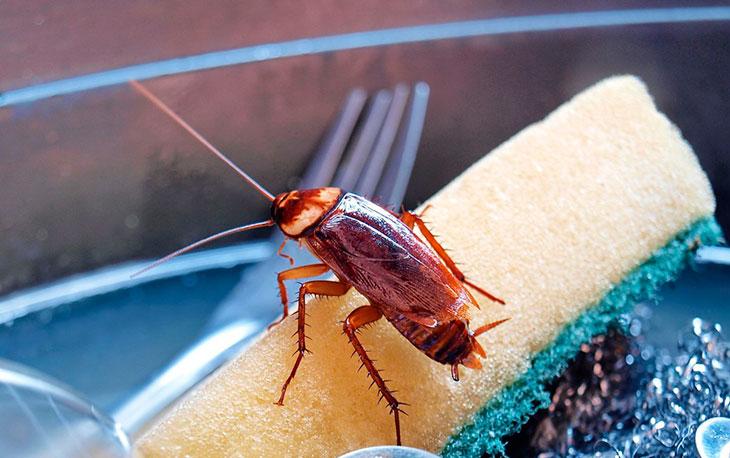 Толкование сна о тараканах по соннику