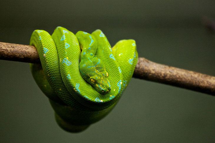 Как выглядела змея