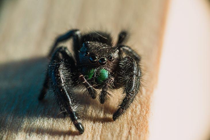К чему снятся пауки по Фрейду