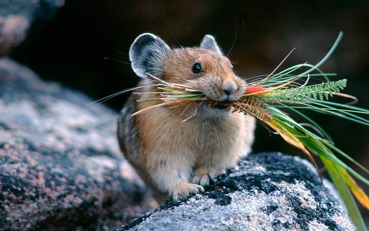Какими были крысы и мыши
