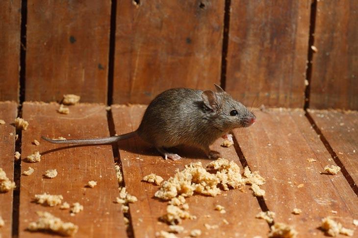 Какие действия исходили от крыс и мышей