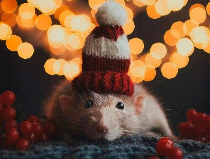 Год крысы какие года