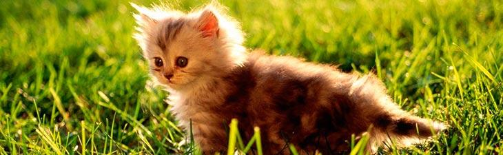 К чему снится рождение котят, кошка с котятами или мертвый котенок?