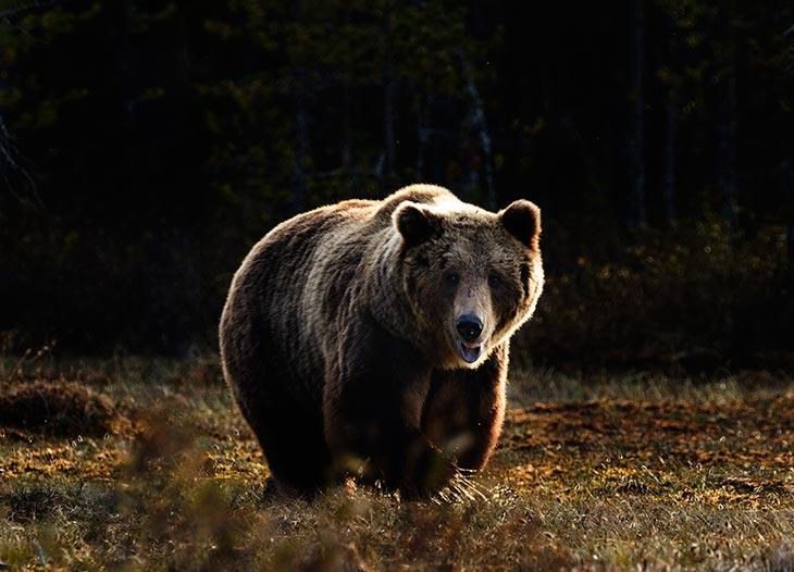 Медведь во сне – еще немного расшифровок