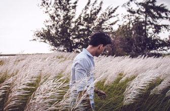 К чему снится трава высокая, по пояс, сухая