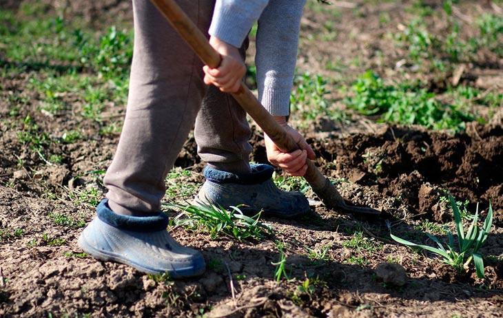 Можно ли копать землю до Благовещения?