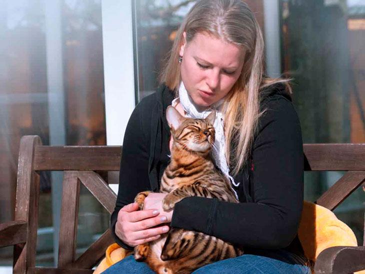 Кот на плече или на груди