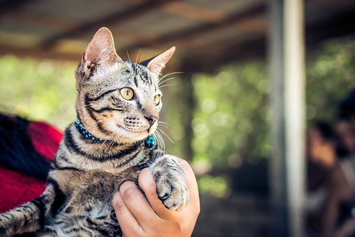 К чему снится найти, принести домой кота?