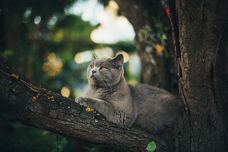 Красивый или страшный кот во сне