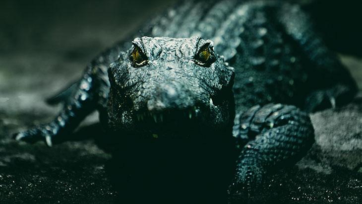Как выглядел приснившийся крокодил
