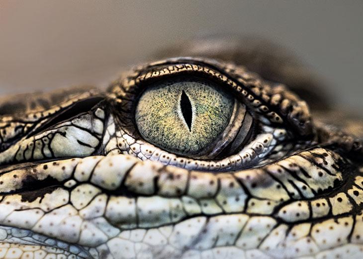 К чему снится как крокодил нападает на кого-то?