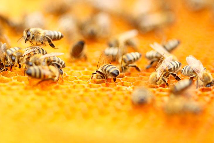 К чему снится мед?