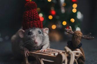Год Деревянной Крысы