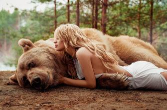 Медведь во снах замужней женщины